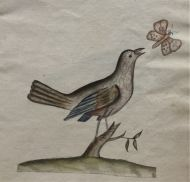 Anthony Farindon's Birds