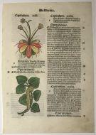 Hortus Sanitatis Leaf 1511