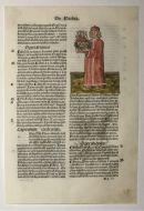 Hortus Sanitatis : Frankincense